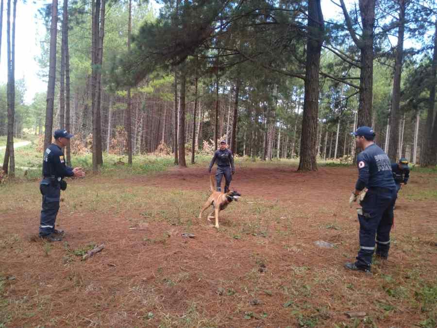 Milor - K-9 Training