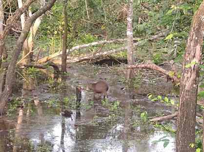 Wildlife I witnessed in the Amazon